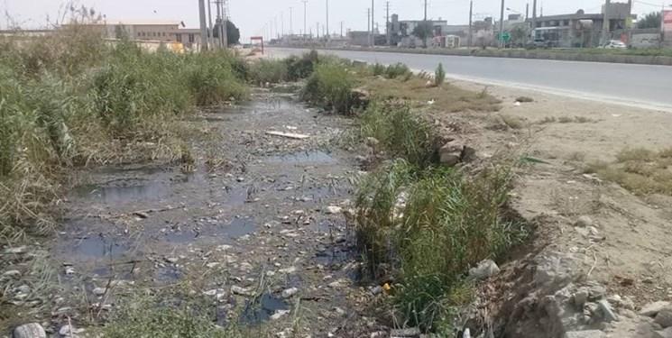 زندگی در کنار مرداب!/ محلات جنوبی بوشهر محروم از حداقلها