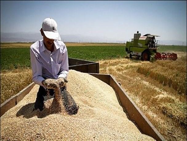 گلایه کشاورزان از عدم پرداخت پول گندم / به جهاد کشاورزی مراجعه کنید