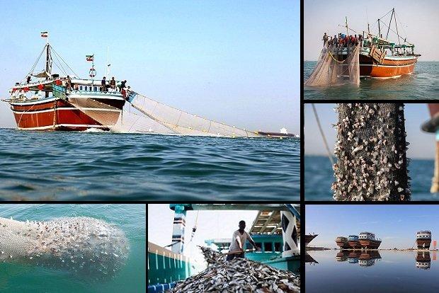 جولان «ترال» همچنان در خلیجفارس/ به فریاد دریا و صیادان برسید
